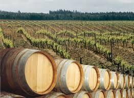 Roteiro _ Entre Vinhos e Pipas