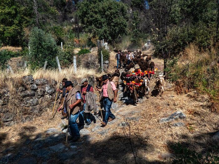 Pastores e seus rebanhos no caminho entre Fundão e Alpedrina [Foto: António Salvado]